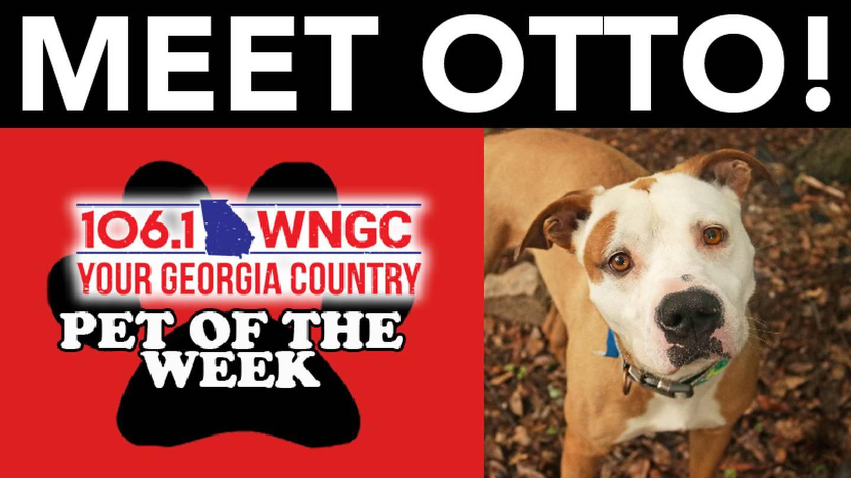 WNGC Pet of the Week